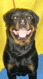330colonyrottie09