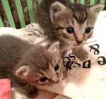 723nursingcats09
