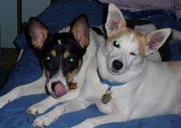 102324theearhounds10