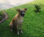 831houstondog10