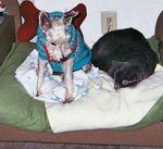 1-29-30dogcatsleeps11