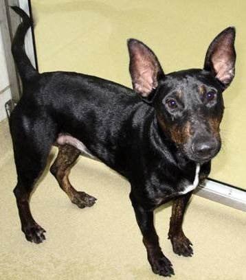 Pregnant Dogs A 3 Legged Old Dog Shelter Dogs One Attacked By Deer And A Grand Prairie