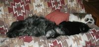 121-22sleepers on couch