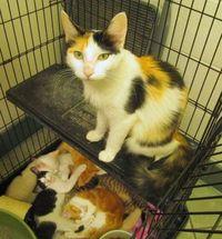630701okcats12