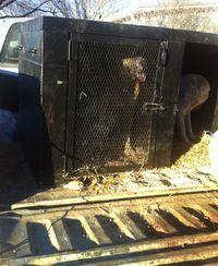 128burnsflatdogbox