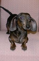 225colonydoxie