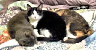 330-31hewettcats