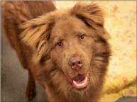 526dasdumpsterdog