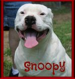 722evermansnoopy