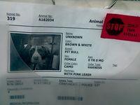 911servicedogcard13