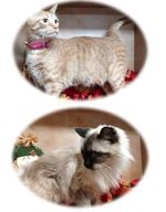 1113colonycats
