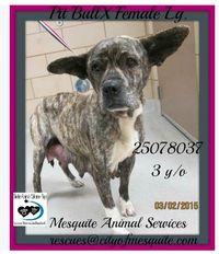310mesquiteearhound