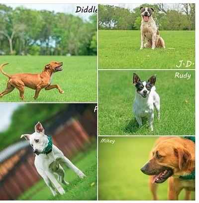 413lancasterdogs