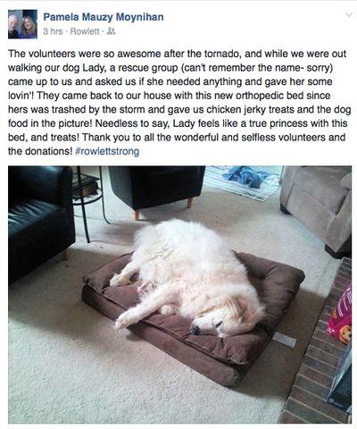 109-10rowlettdog
