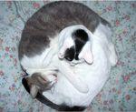 11617ballofcats