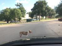 Roaddog