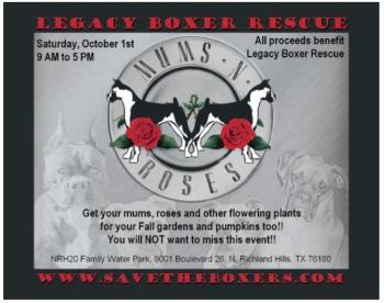 Boxerroses