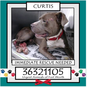 82617curtisfortworth