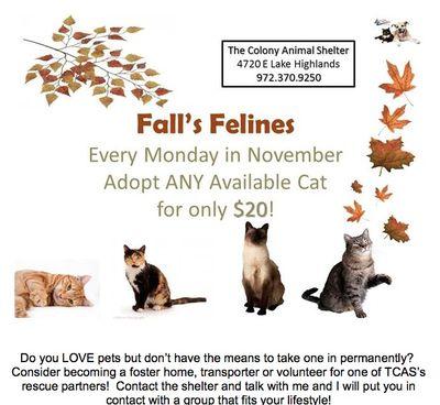 110809thefallcats
