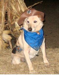 1231cowboydog