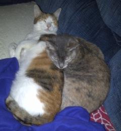 226kelseycats