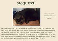 326carrsasquatch