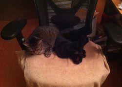 404-05sleepingcats