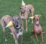 421birthdagreyhounds