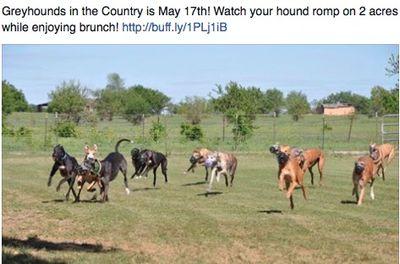 50103greyhoundsinthecountry