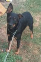 902terrylynnearhound