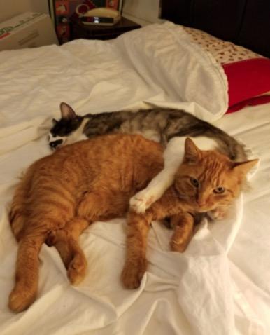Feral Cat Rescue Dallas