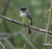 214oakcliffbird