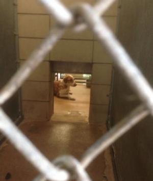 426garlanddog