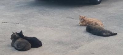 Dawnasshopcats