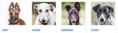 1115greyhounds