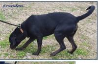 131wilmerbrandonnosehound