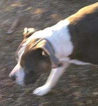 205thorpsaveddog