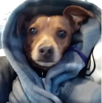 205howtodresstheOKdog