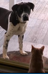 308dogcatlake2018standingdog