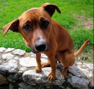 404euless ear dog