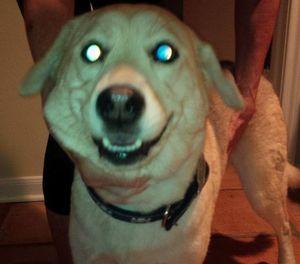 1125houstondog
