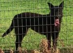 624bfblackdog