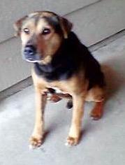 321barkleydog