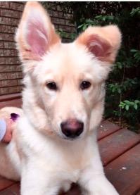430501baronearhound