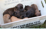 721postboxpups