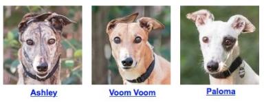 327earhounds