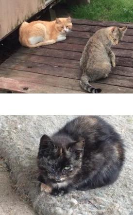 404kaufmancatstwo
