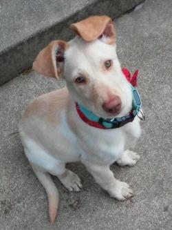 509freeroamingearhound