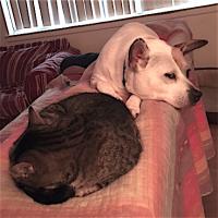 608dogcatsleep