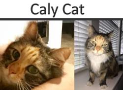 622calycat17